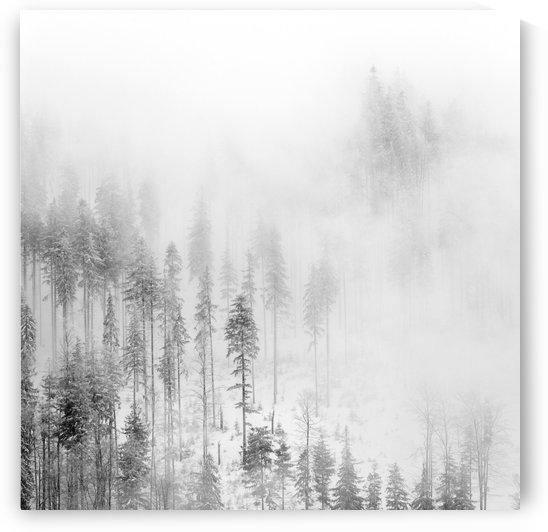 Winter Landscape II by Marcin Lukaszewicz