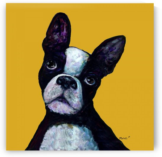 BOSTON TERRIER ON YELLOW by Moses