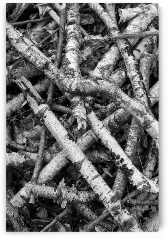 Forest IX  by Marcin Lukaszewicz