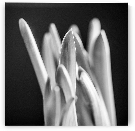 Flowers study I by Marcin Lukaszewicz