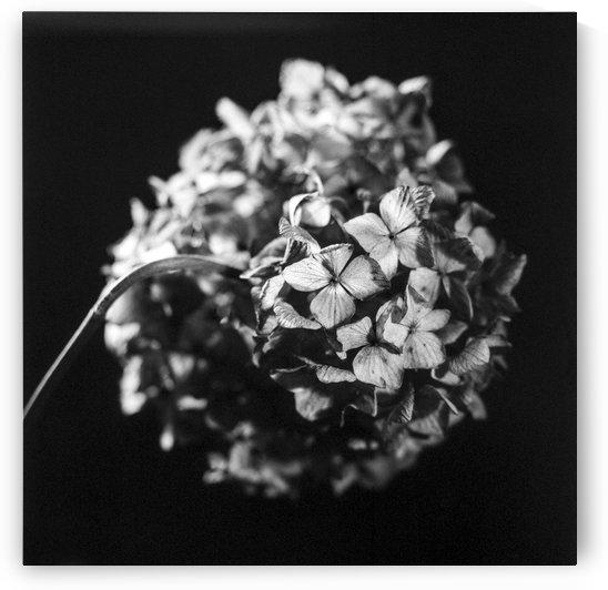 Flowers study II by Marcin Lukaszewicz