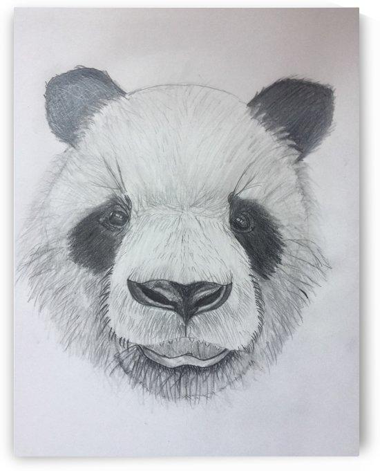 Panda by Zejun Zhao