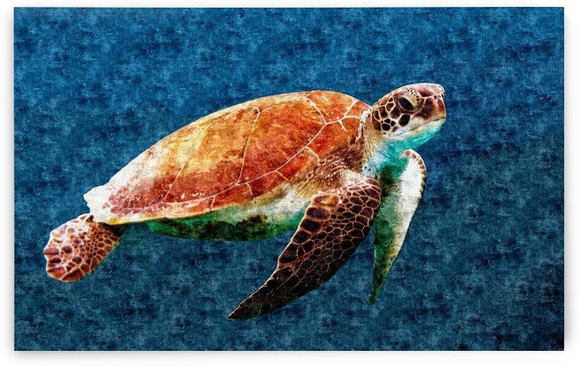 Turtoise by Mark John Baring