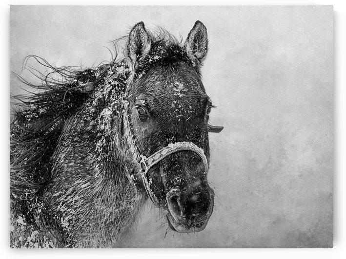 Ice Princess by SharaLee Art