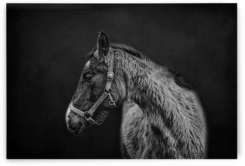Amish Workhorse by SharaLee Art