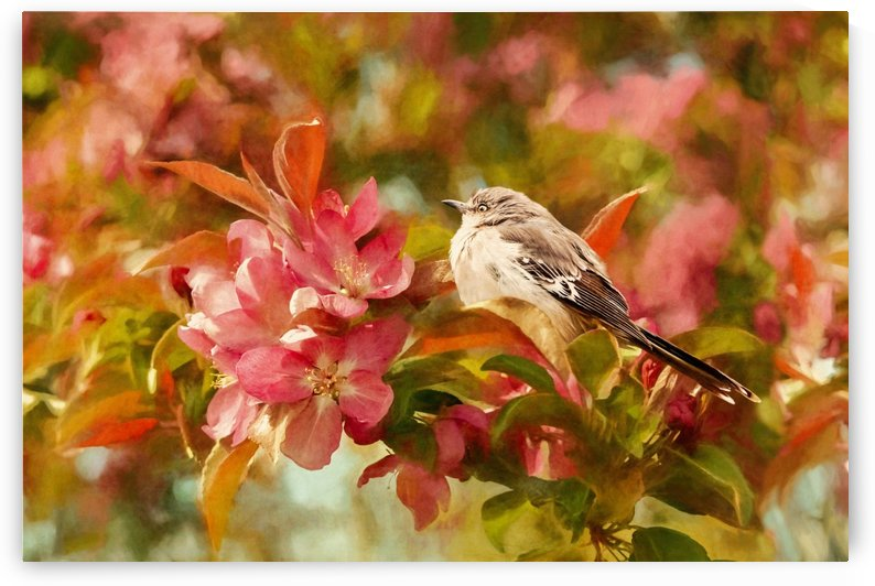 Sparrow In The Apple Tree by SharaLee Art