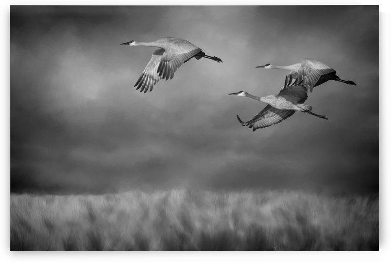 Sandhill Crane Trio In Flight by SharaLee Art