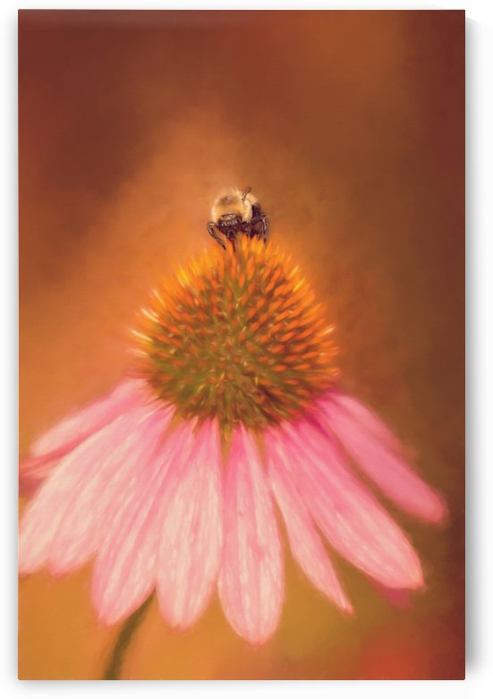 Bumblebee On Pink Coneflower by SharaLee Art