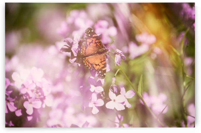 American Painted Lady Butterfly Among Wildflowers by SharaLee Art