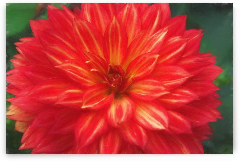 Floral explosion by dbriyul