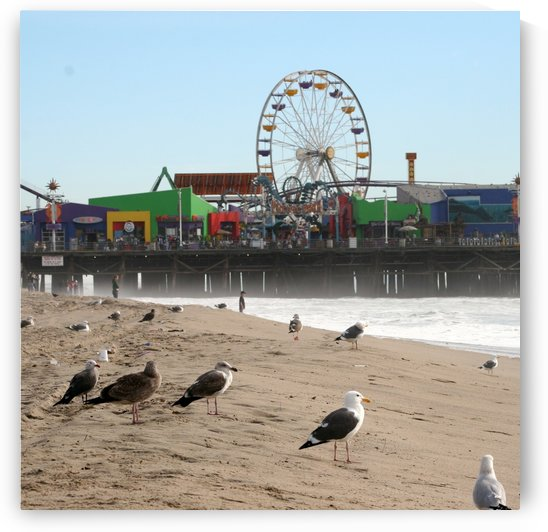 Seagulls and Ferris Wheel #1 by Hold Still Photography