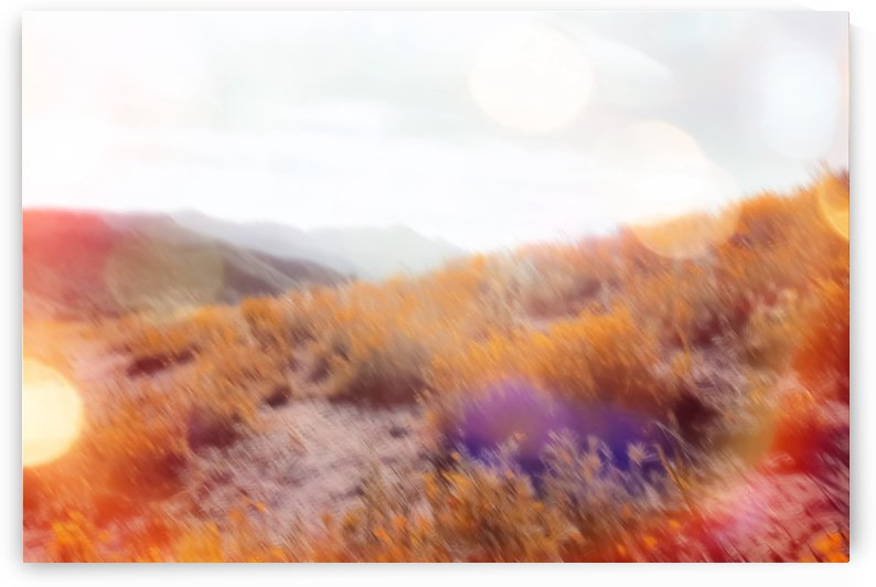 yellow flower field on the mountain with summer light bokeh abstract by TimmyLA