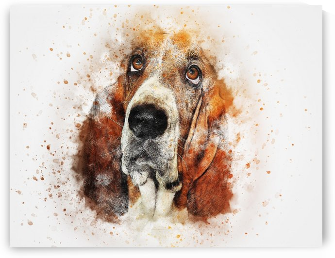 dog by Stock Photography