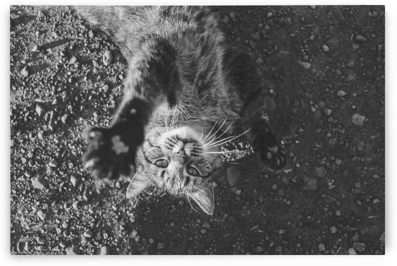 Cat by Stockpix