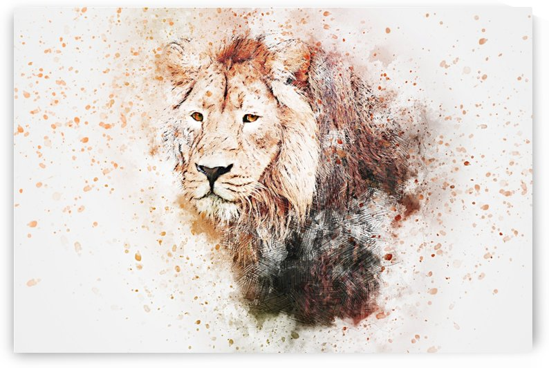lionss by Stock Photography