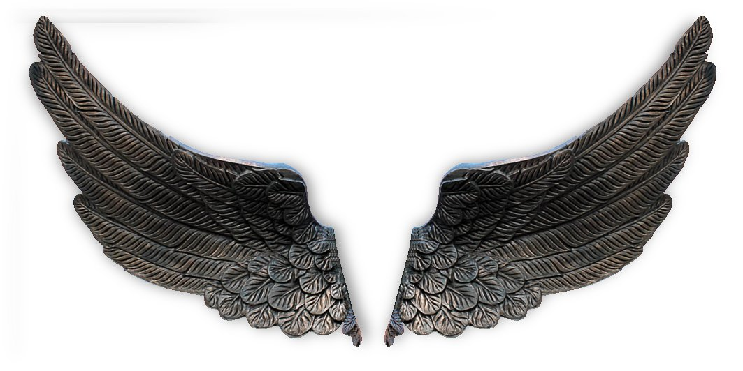wings by Stock Photography