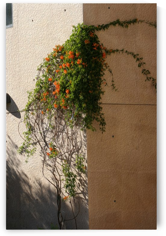 Wall Vines on Edge by Hold Still Photography