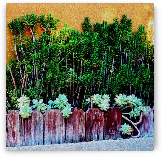 Wall of Succulents by Hold Still Photography