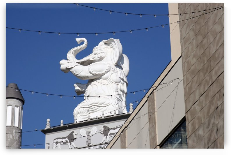 Hollywood Dancing Elephant by Hold Still Photography