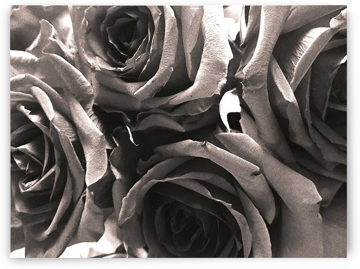 everlasting love of roses by Michael Trego