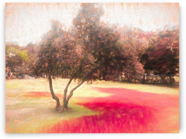 The Raanana Park 1 by raanan ben ari