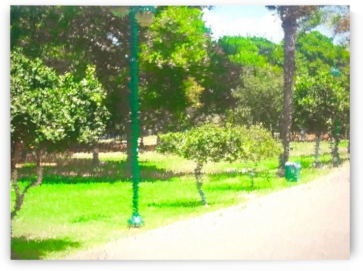 The Raanana Park 8 by raanan ben ari