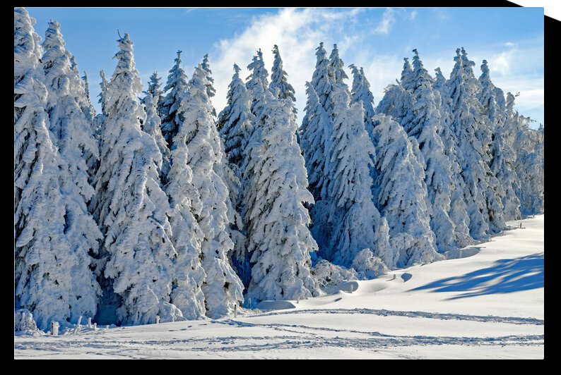 Snow  Crusted Trees Rocky Mountains by Photo Planet