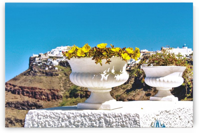 Yellow flowers and the Mountains by Bentivoglio Photography