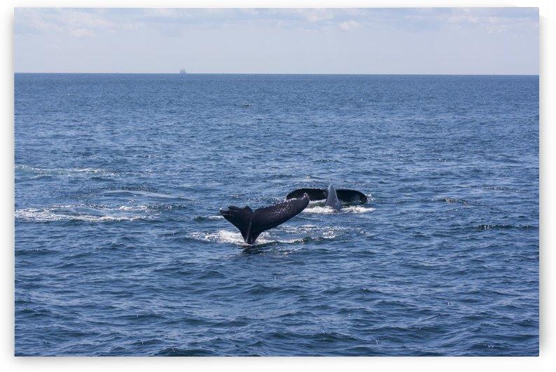 Whale Watching by Mark Fierschnaller