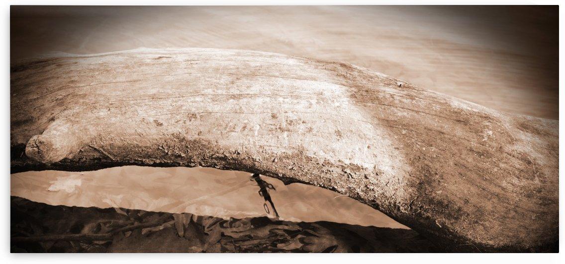 Toad's Pass by C  Michelle Gonzalez