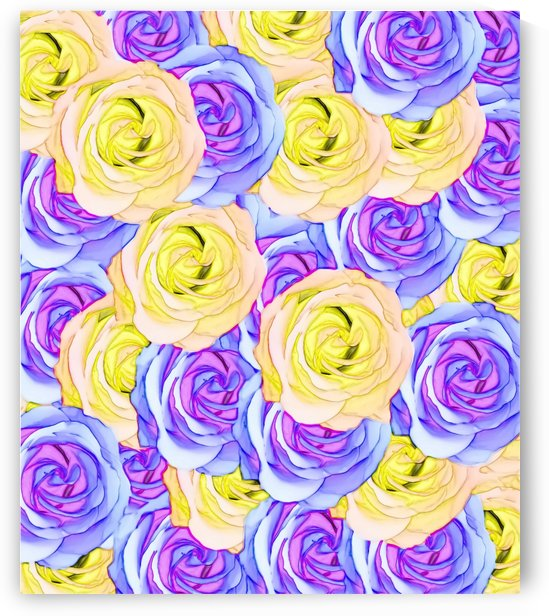 blooming rose texture pattern abstract background in yellow and pink by TimmyLA