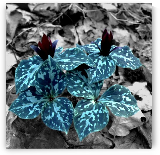 Camouflaged Flowers  by Greene Safaris Productions