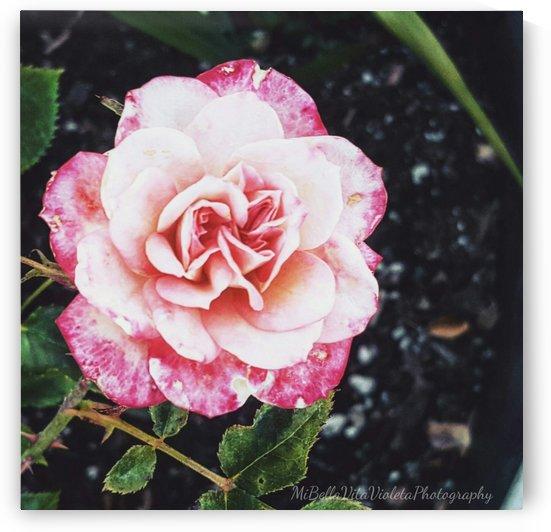 Como la flor by Violet S Ramos