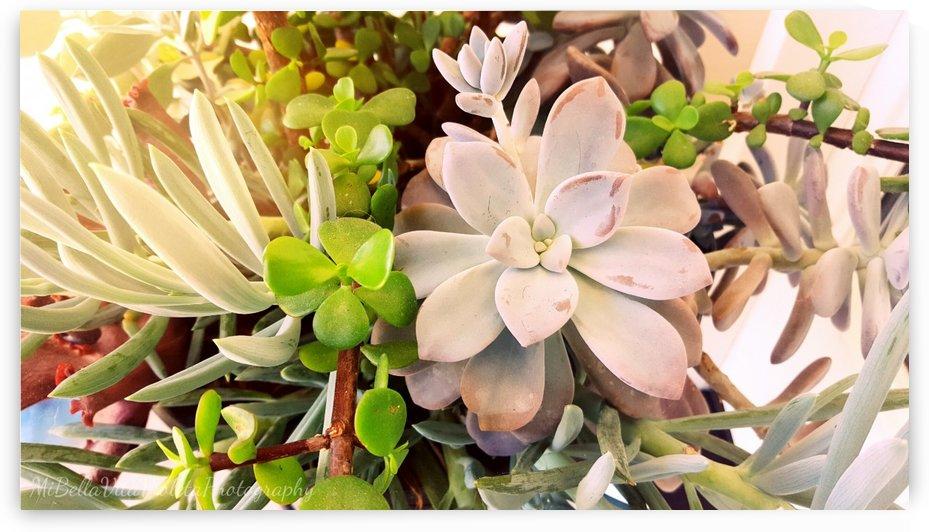 Plantitas by Violet S Ramos