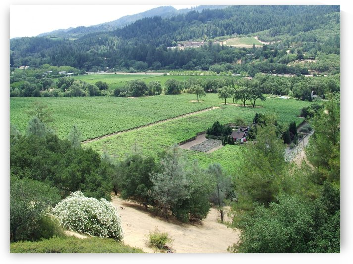Looking Down at Napa Califoria 2007  by Darryl Green
