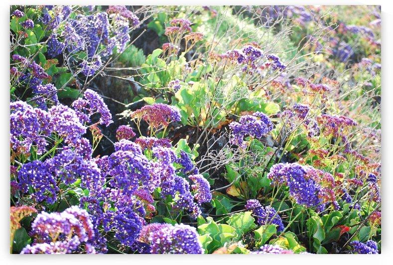 Purple Wild Flowers in Dana Point CA by Darryl Green