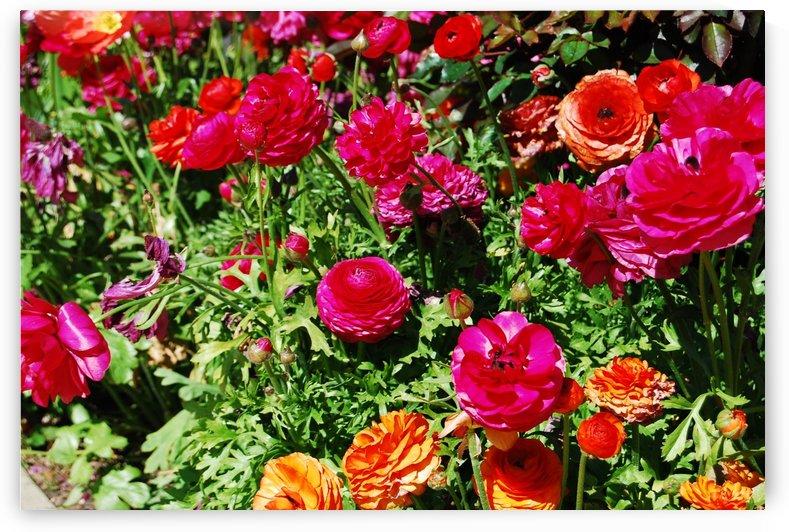 Flowers Growing in a garden by Darryl Green