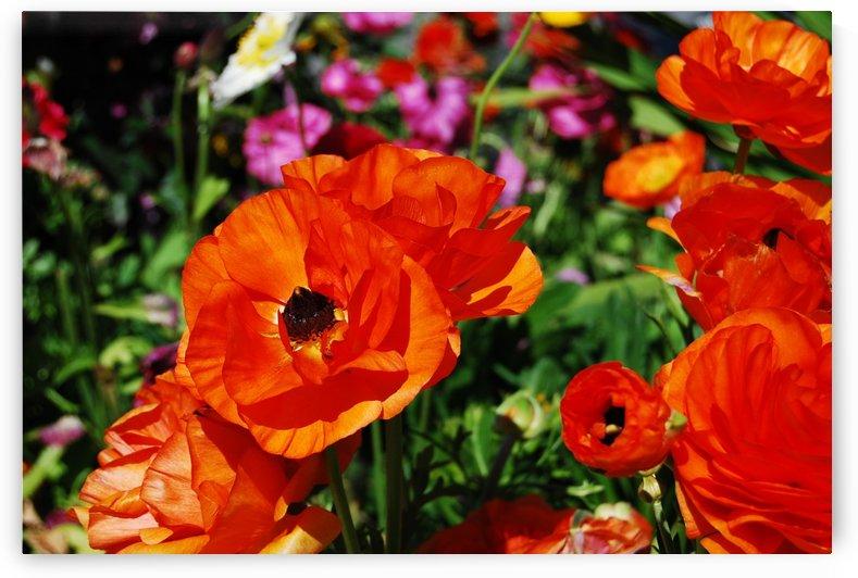 Garden with Orange Flowers Growing by Darryl Green