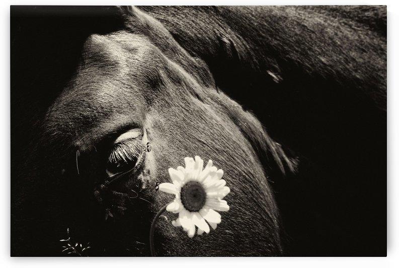 Horse - 08 by Yurko Dyachyshyn