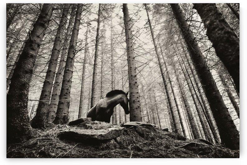 Horse - 01 by Yurko Dyachyshyn