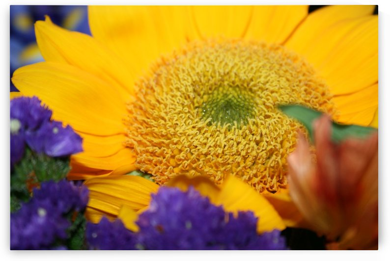Sunflower  by Digitalu Photography