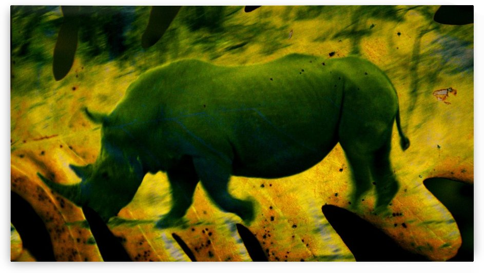 The Rhino and the Leaf by D de G