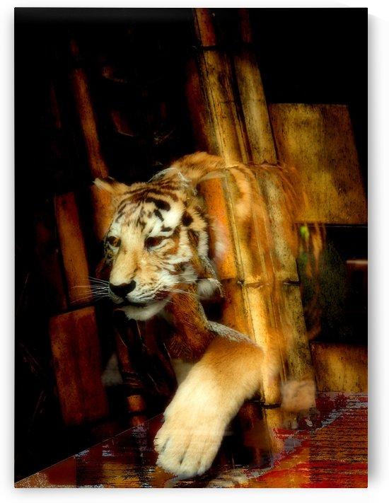 Tiger by D de G
