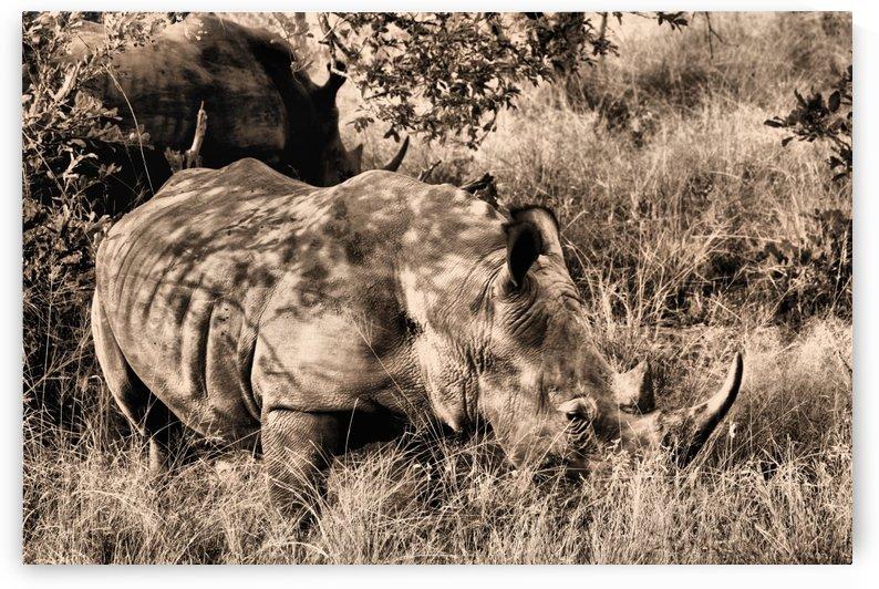 South Africa Rhino by D de G