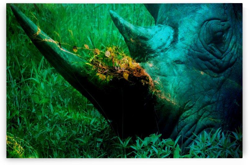 Resting Rhino by D de G