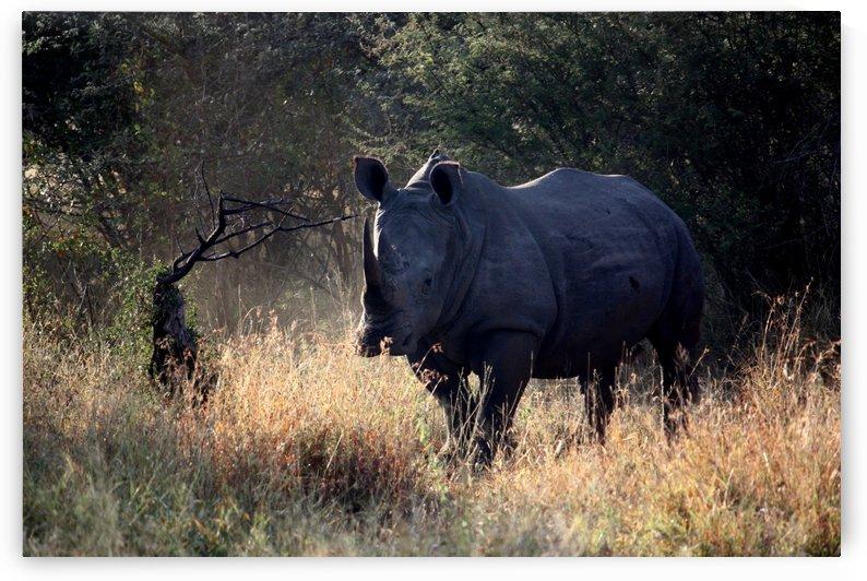 Rhino South Africa by D de G
