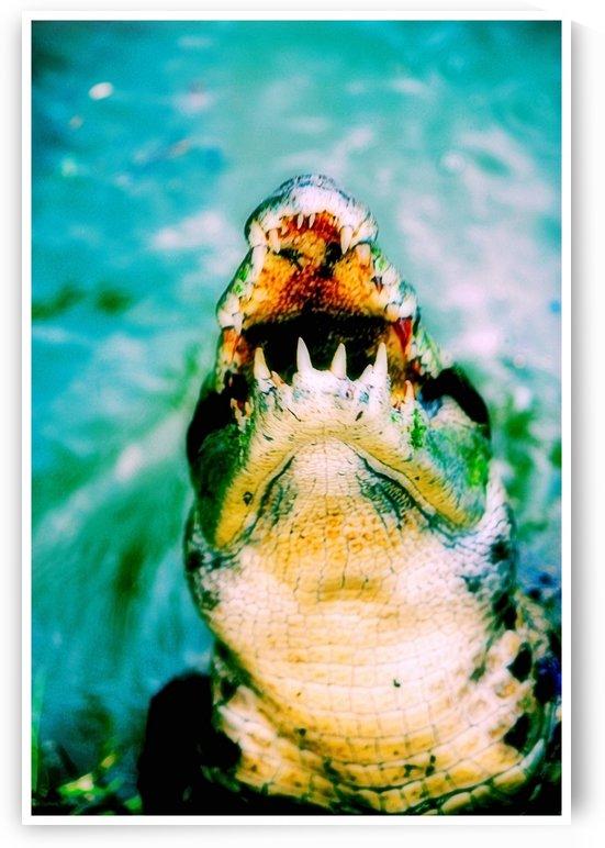 Crocodile Hunger Games by D de G