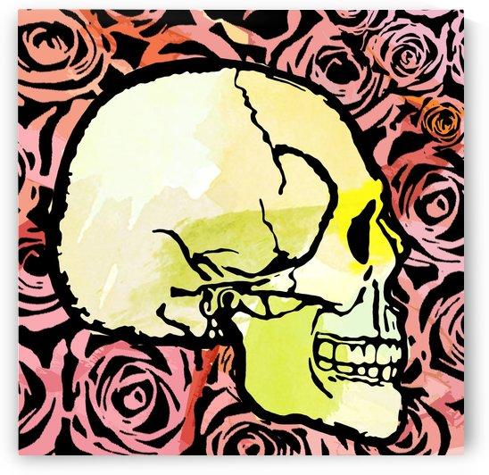 skull vector by Taylor Snyder