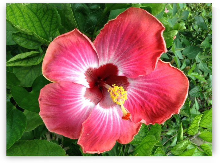 Awesome Petals by Galena Gibson