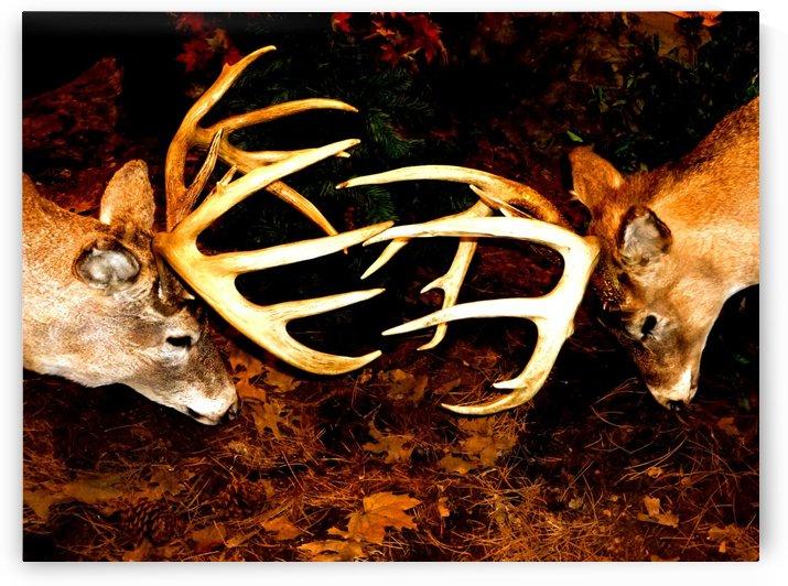 Deer by D de G